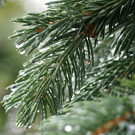 Tree,, by Ólafur Ingi Ólafsson - Nature Up Close Trees & Bushes ( water, water drops, reflection, tree, green, drop, drops, reflections, water drop )
