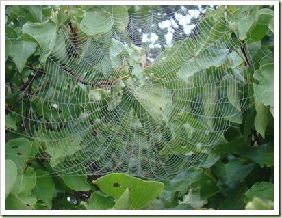 08-20-08 Spiderwebs 004