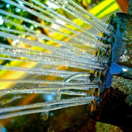 Sprinkler by Charlie Brown - City,  Street & Park  City Parks