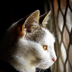 Mia by Jordiie Hunt - Animals - Cats Portraits