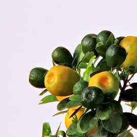 Calamansi by Yusop Sulaiman - Nature Up Close Gardens & Produce