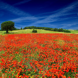 Colours by Tonino De Rubeis - Landscapes Prairies, Meadows & Fields