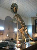 Tarbosaurus Fossil at the Natural History Museum