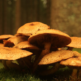 by Michael de Schacht - Nature Up Close Mushrooms & Fungi