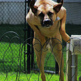 Super Dog by Donna Schmidt - Novices Only Pets