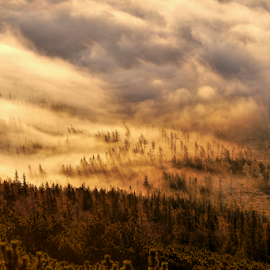 Burning sky by Petr Podroužek - Landscapes Forests ( clouds, sky, forest, burning )