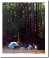 Redwood Camping - photo by Light. ©2002-2008 Bonnee Klein Gilligan. All rights reserved.