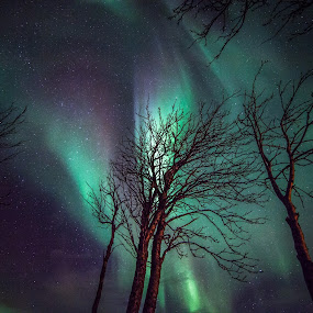 Trees and northernlights by Benny Høynes - Landscapes Forests ( northernlights, aurora, trees, wintertime, norway,  )