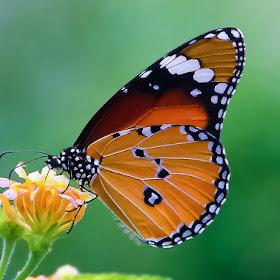 butterflyseffect1.jpg