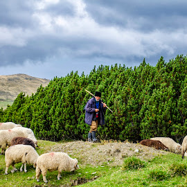 Romanian shepherd by Cristina Grigore - Landscapes Mountains & Hills ( natural light, mountains, shepherd, romania, old man, natural beauty )