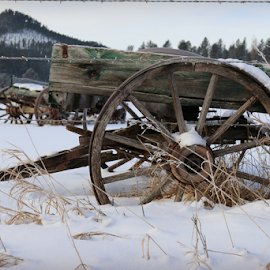 Wagons West Winter by Mark Stites - Transportation Other ( #wagon #winter #western #history #wildwest )