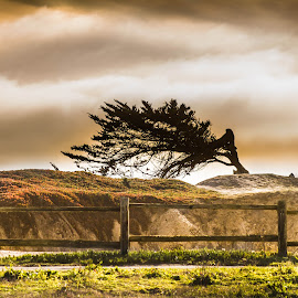 wind blown by Alisa German - Landscapes Beaches ( trees, beach,  )
