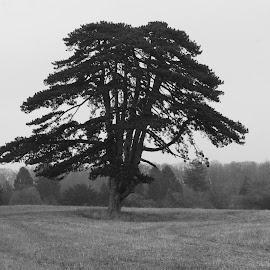 Solitary tree by Diane Dunn - Landscapes Prairies, Meadows & Fields ( trees, black&white, fields )