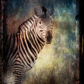 Zebra Textured by Gary Want - Digital Art Animals ( okavango delta, kwara, botswana, safari, zebra, africa, #wildlife, #locations )
