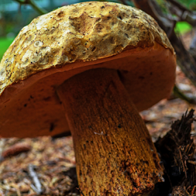 Rain, Finally by Jeanne Knoch - Nature Up Close Mushrooms & Fungi (  )