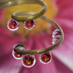 by Yustinus Slamet - Nature Up Close Natural Waterdrops