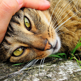 caress, tenderness by Luna Sol - Animals - Cats Portraits