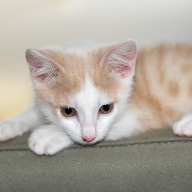 HAN by Bjay Aysel - Animals - Cats Kittens