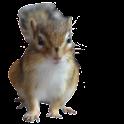 Chipmunks Wallpaper icon