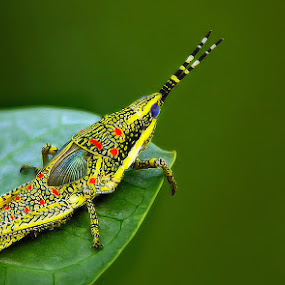 * by Shibram Nag - Animals Insects & Spiders