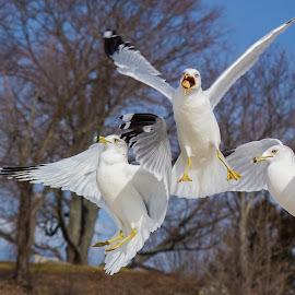 That's mine by Thomas Murphy - Animals Birds