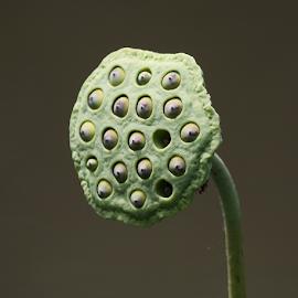 by Antonio Kantod - Nature Up Close Gardens & Produce