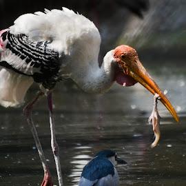 Bird with the prey by Deven Dadbhawala - Animals Birds