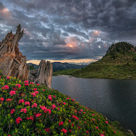 Old stump by Luca Mondini - Landscapes Mountains & Hills ( water, old tump, clouds, cloudy sky, wilderness, mountain, lake, sunrise, flowers, alps )