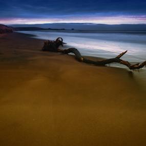 Dunes and sea shore by Cristobal Garciaferro Rubio - Landscapes Travel ( water, sand, dunes, desert, tree )
