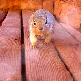 Curious Squirrel by Aly Silveira - Novices Only Wildlife