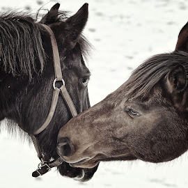 by Dave Meng - Animals Horses