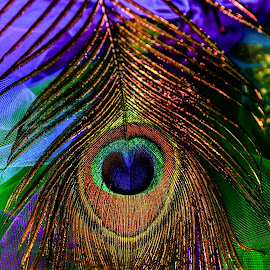 Peacock Feather by Michele Dan - Abstract Patterns ( abstract art, peacock feather, feathers, feather, peacock )