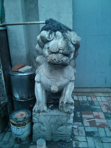 无奈的狮子 (Shizi)