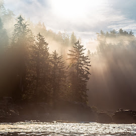 Light of the Northwest by Stephen Bridger - Landscapes Forests ( outdoor photography, canada, forest, travel, fishing boat, sun, port renfrew, foggy, fog, outdoors, vancouver island, light, bc, travel photography, mist, british columbia )