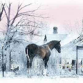 Lost Christmas by Donna Brown - Animals Horses ( landscape animals horses earm abandoned winter cold lonely lost )