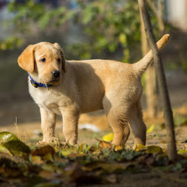 MaxX by Gaurav Madhopuri - Novices Only Pets
