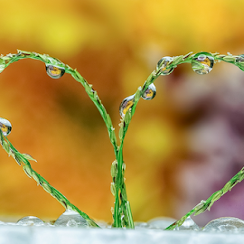 Loving heart by Thảo Nguyễn Đắc - Abstract Water Drops & Splashes