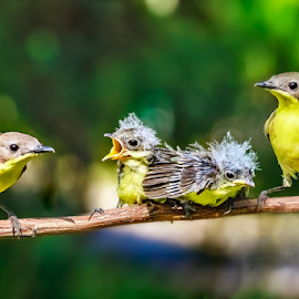 Birds Family by MazLoy Husada - Animals Birds