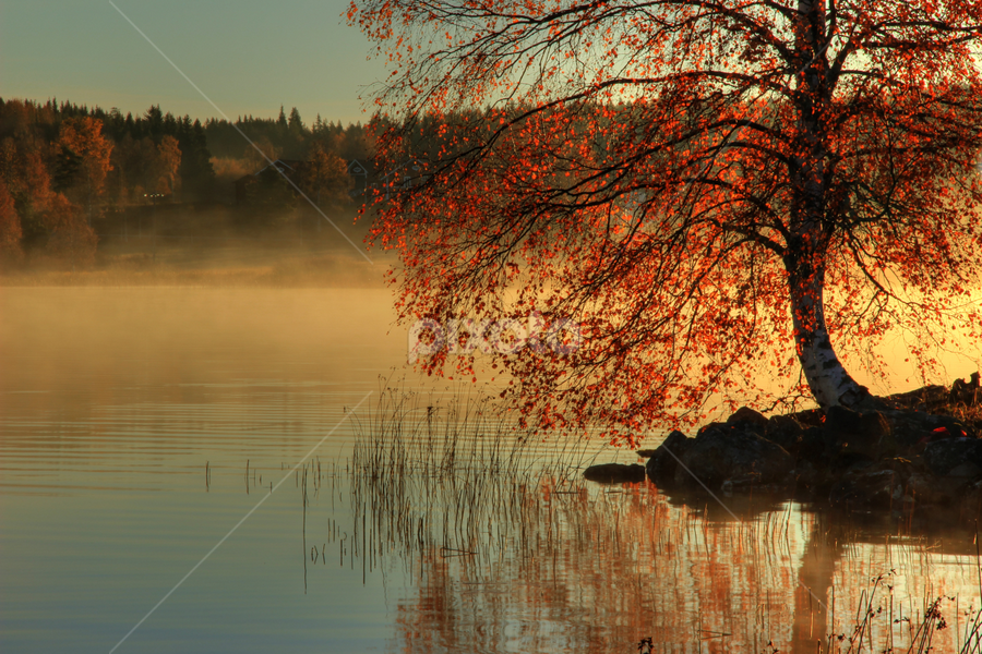 Autumn beauty by Julija Moroza Broberg - Landscapes Forests ( orange, birch, reflection, foggy, tree, fog, autumn, lake, sunrise, morning, light )