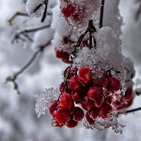 Frozen by Miro Cindrić - Nature Up Close Other Natural Objects