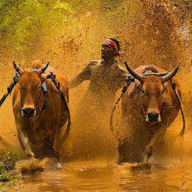 Fast and Wet by Zairi Waldani - Sports & Fitness Rodeo/Bull Riding