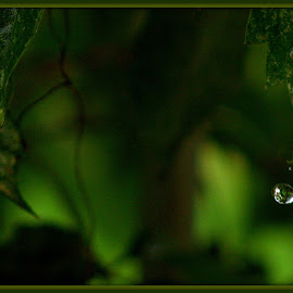 Raindrop by Wendy Thorson - Nature Up Close Water
