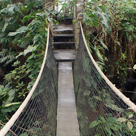 bridge in the jungle by Poul Erik Vistoft Nielsen - Landscapes Forests ( jungle, rainforrest, plants, bridge )