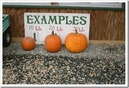 pumpkin day 010