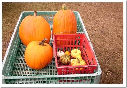 pumpkin day 009