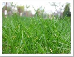 grass_spring_blades_249491_l