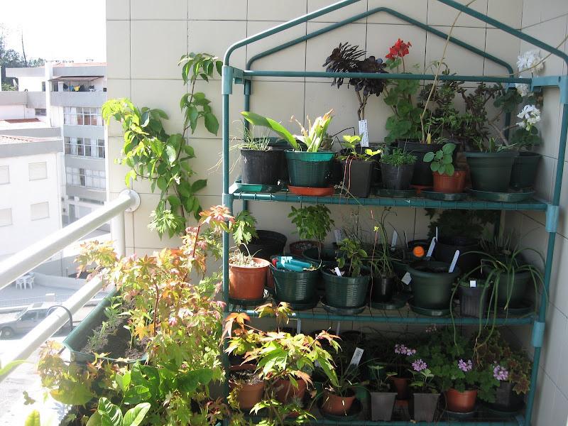 Mis balcones viveros IMG_2516