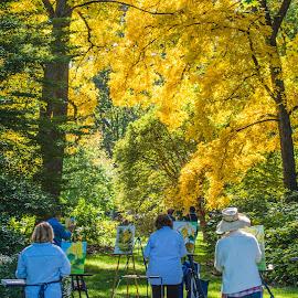 by Matt Meyers - City,  Street & Park  City Parks ( st louis, tree, garden, missouri botanical garden, fall, color, colorful, nature )