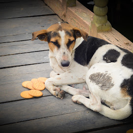 A stray dog  by Prasanta Das - Animals - Dogs Portraits ( stray, dog, portrait )