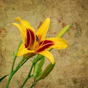 Summer's Golden Beauty by Sharon Pierson - Flowers Flower Gardens ( textured background, orange, lily, yellow,  )